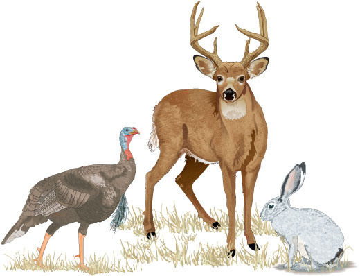 A turkey, a deer, and a rabbit